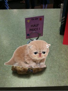 Sad Half Priced Kitten